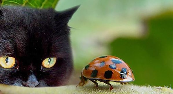 Greek superstitions, black cats and ladybugs